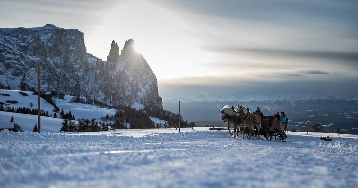 Sulle slitte trainate dai cavalli in alto adige for Cavalli bolzano